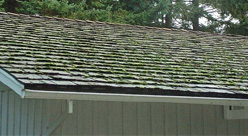 Before cedar shake roof cleaning