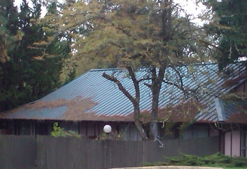Professional Metal Roof Cleaning In Portland Tips Amp Service