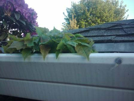 Plants growing out of gutter