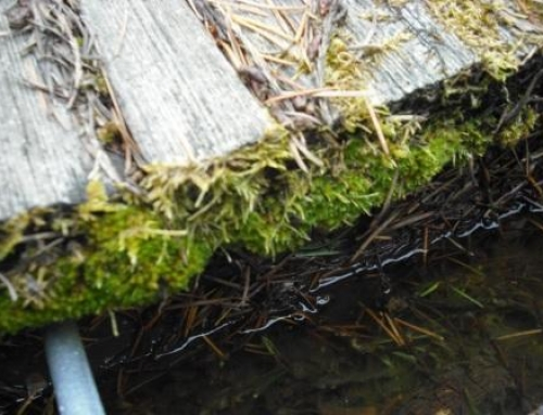 Rain is hard on roofs and roof moss removal is important, learn why?