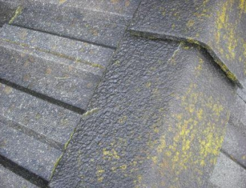 Update on the Portland Roof Cleaning Marketplace