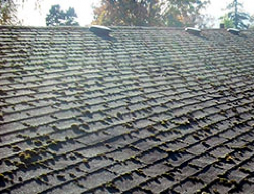 Do you have a Roof Maintenance Plan?