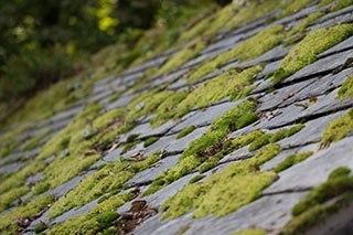roof-moss
