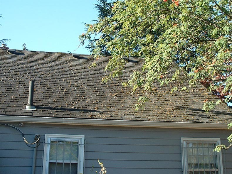 Before Roof Cleaning Vancouver Washington