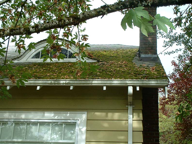 Algae, Moss, Mold or Mildew: What's That Stuff on My Roof?