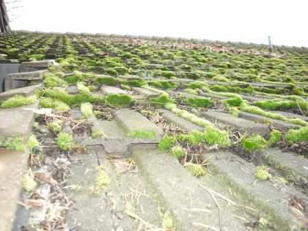 Does moss hurt your roof? Learn why roof moss removal is so important.
