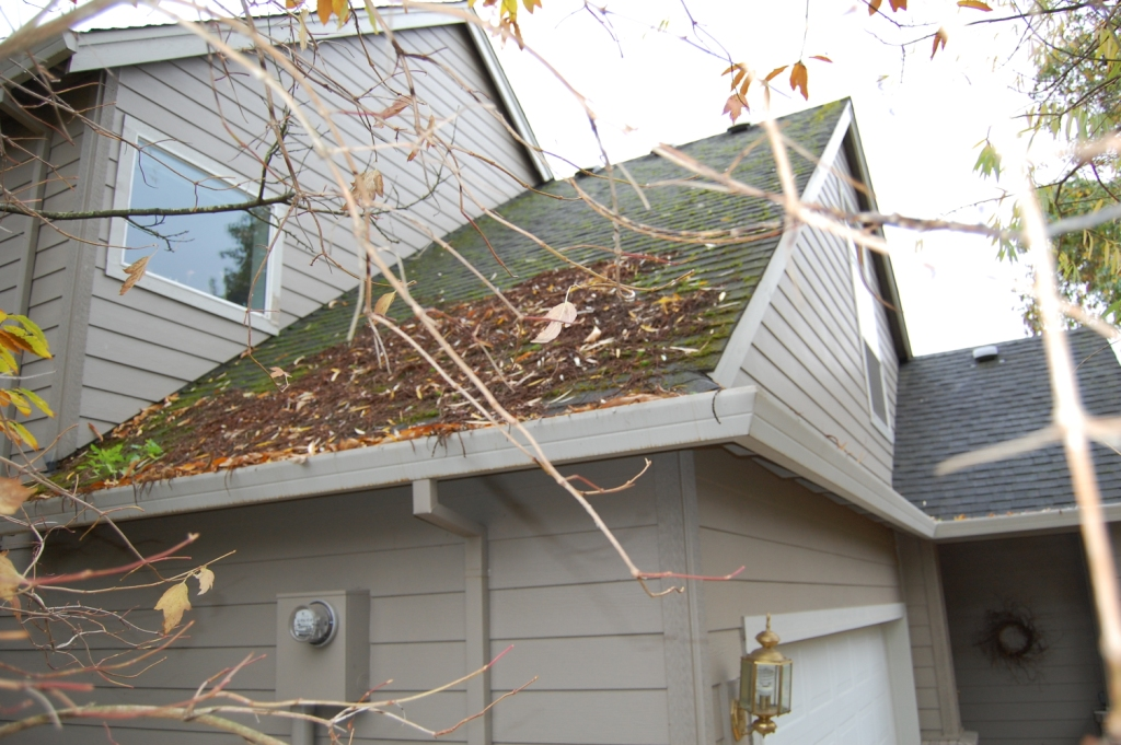 Roof in need of of much maintenance - debris, moss, gutters all need cleaning, treating and inspection