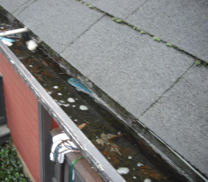 Clogged gutter, full of water