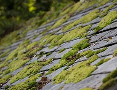 How Do You Prevent Moss From Growing On Your Roof?